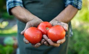 legumes-fruits-partenaire-bistrotd4saisons